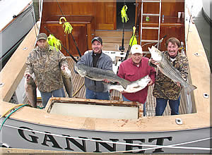The Gannet - Virginia Beach striper fishing charter.